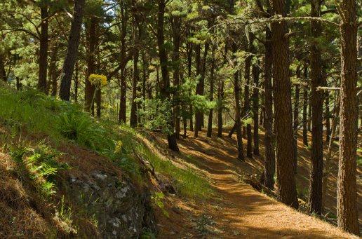Camino entre Montaña Alta y Marente