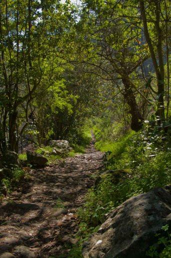 Camino Vueltas de Acero