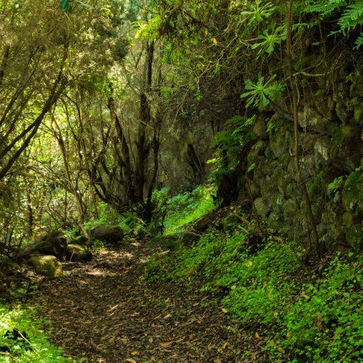 Camino La Laja